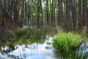 Billabong Forest Stock by blaisedrew62