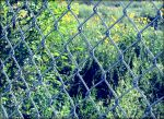 fence and green by sataikasia