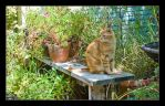 Garden Cat by kalany