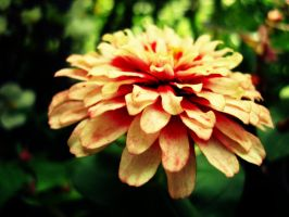 Blomst by Superbiaa