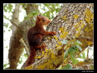 Young squirrel by Henriksen