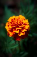 Orange Crush by rmh7069