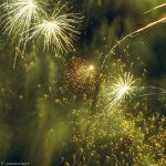 Light Fantastic: Green Lights by agonis