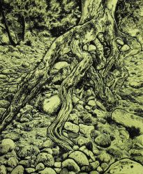 Tree in Pen and Ink by renji7