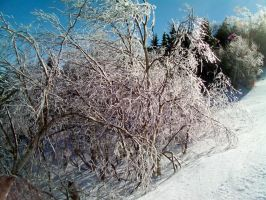 Ice Covered Trees 4 by DerpyDash64