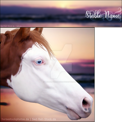 HEE Stable Set - Pinto Sunrise by Vellum-Graphics