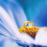 .: drop on daisy :. by all17