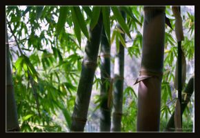 Bamboo Forest by Aehs