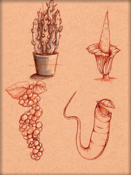 Plant Study 1 by LordMaru4U