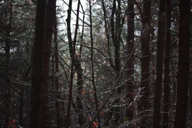 catching lights in the woods by SchlafundAtemlos