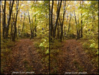 Forest Trail 3D by odhinnsrunes