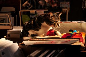 bookcat in a bookstore by xmimivalentine