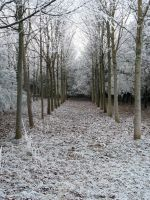 Winter Path 3 by SerapStock