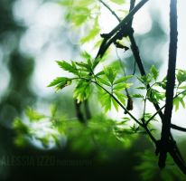 Simply Green by Alessia-Izzo