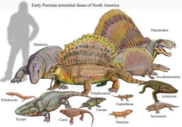 Early Permian of USA by DiBgd