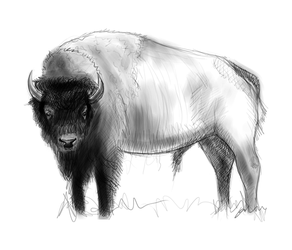 Bison not a Buffalo by juliano7s