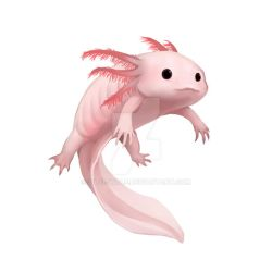 White Axolotl by Silce-Wolf