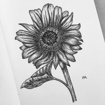 Sunflower // pen sketch by MajesticPaula