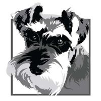 My Miniature Schnauzer 'Kiko' by Tazmaa