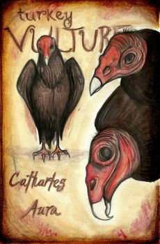 Turkey Vultures - Illustration by Crowtesque