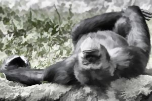 Lazy Day Chimpanzee Fx