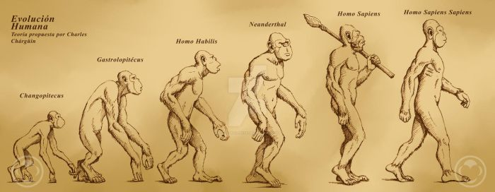 Evolucion Humanidad by ocelotejaguar