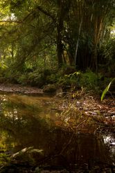 Small Swamp 3 by Armathor-Stock