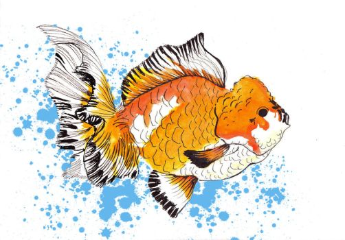 chinese gold fish by starpersona