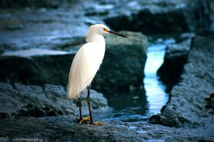 Graceful and elegant 2 by TlCphotography730
