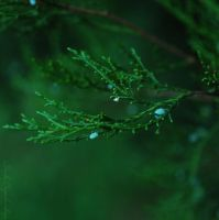 ..green.. by TheRedGirl