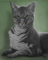 Desmond Pet Caricature by CharReed