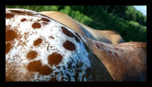 Seeing Spots by equineinnocence