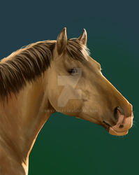 Kaplan - Speed Painting by BH-Stables