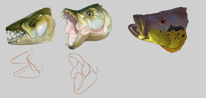 Fish jaw study by Luneder