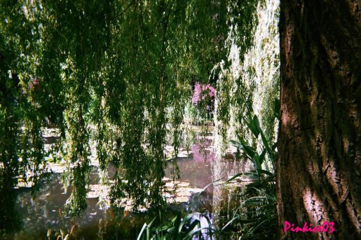 Weeping Willow by pinkice03