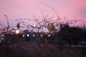 Holly Lights by bluemix2