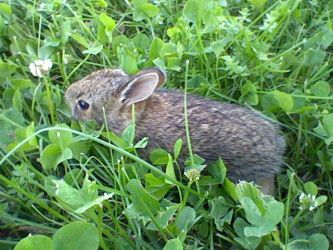 Bunny in the grass by XD-385