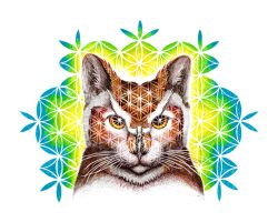 Psychedelic Cat Owl by nunt