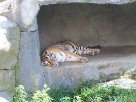 Tiger Lazy Days by DominosAreFalling