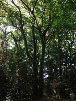 Trees I by PccMBsF