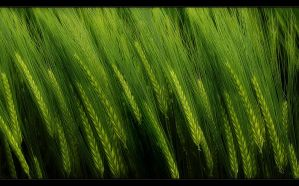 Green by Hartmut-Lerch
