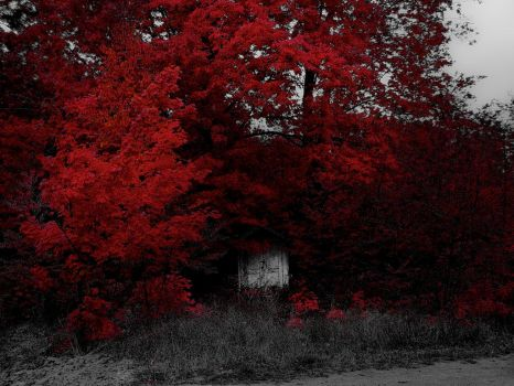 The Shed Under Red by toddyost