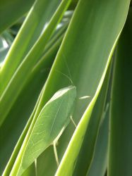 Leaf Bug Thing by LucidFusion