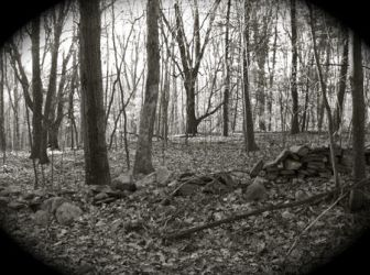 Worcester Woods 9 by scarygirl67