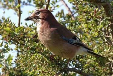 Jay 25-06-18 by pell21