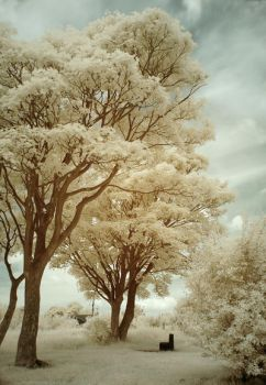 The Park Infrared by DavidCraigEllis