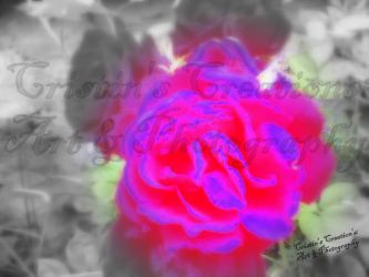 A Rose of a Different Color by The-Immortal-Iris