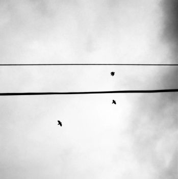 Birds + Lines IV by Daionii