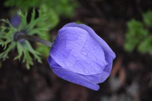 Sleeping anenome by snoogaloo
