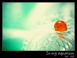In my aquarium by Frall
